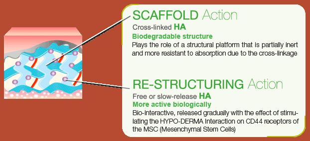 azione scaffold e ristrutturante eng